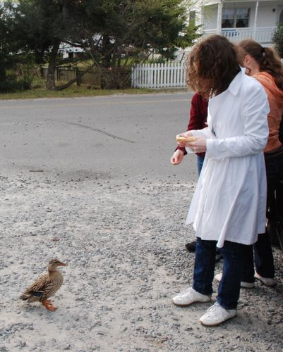 Jane and the feral duck