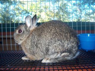 Rabbitiggie