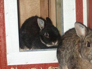 Rabbitsadie
