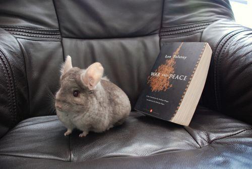 ZuZu loves a good book