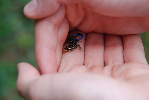 Baby lizard 8_08